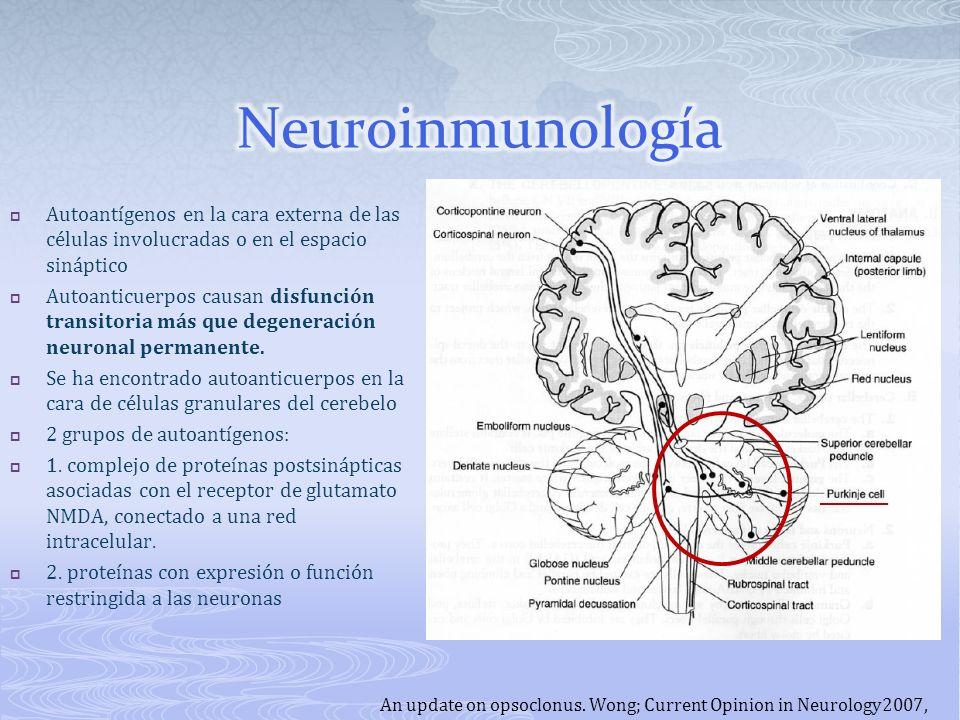 Neuroinmunología Autoantígenos en la cara externa de las células involucradas o en el espacio sináptico.
