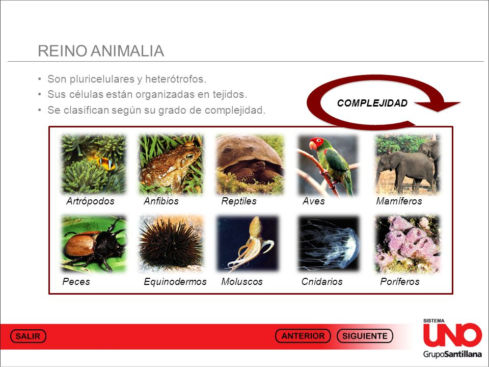 REINO ANIMALIA • Son pluricelulares y heterótrofos.