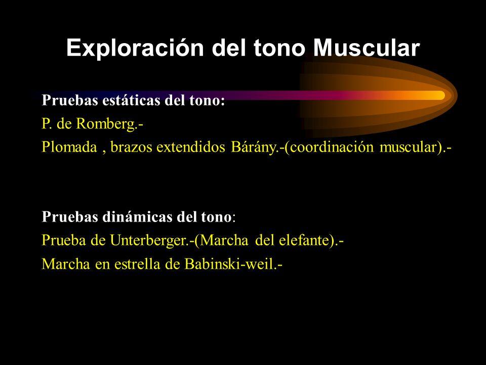 Exploración del tono Muscular