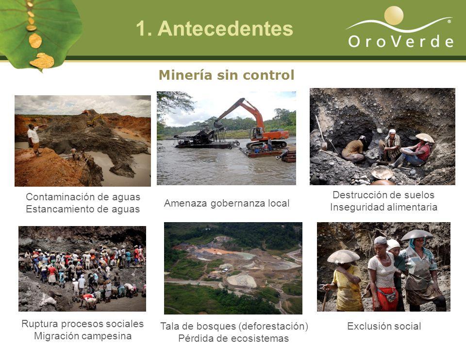 1. Antecedentes Minería sin control Contaminación de aguas