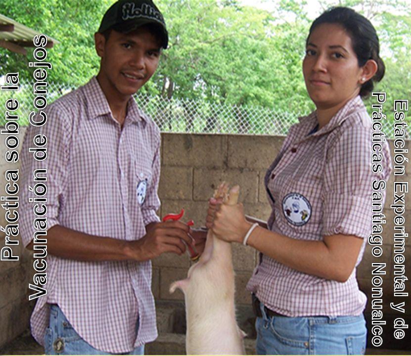 Práctica sobre la Vacunación de Conejos
