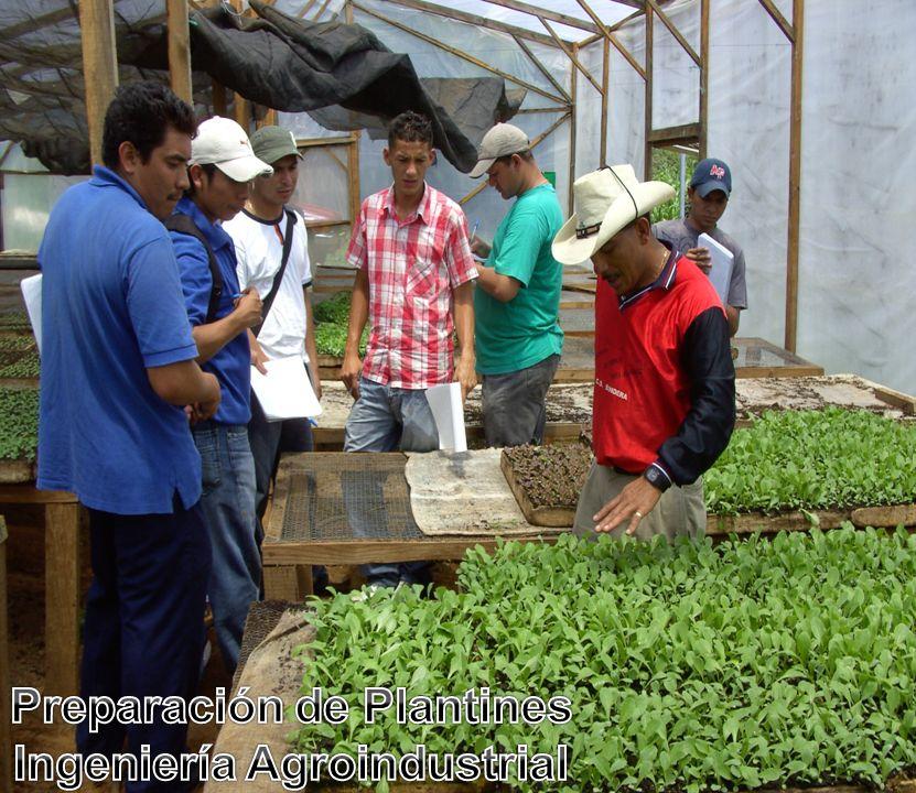 Preparación de Plantines Ingeniería Agroindustrial