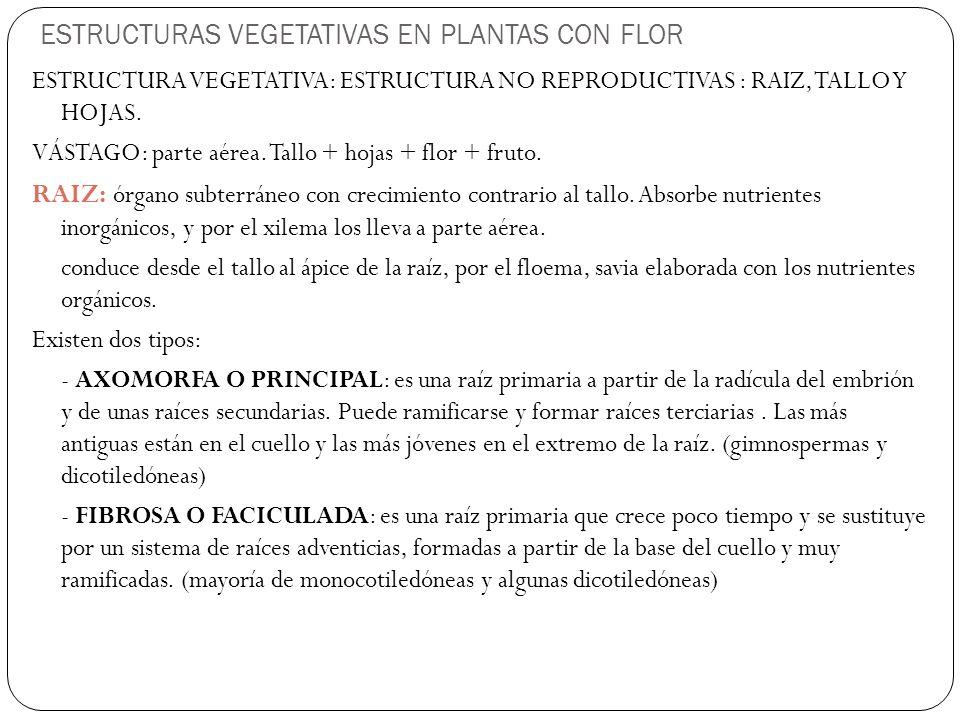 ESTRUCTURAS VEGETATIVAS EN PLANTAS CON FLOR