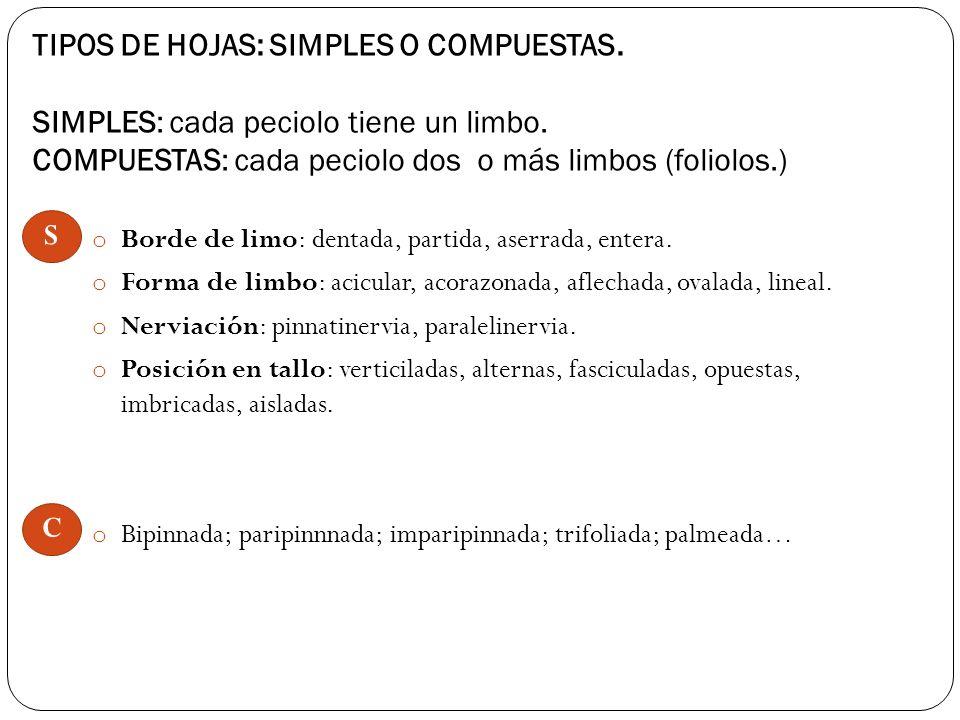 TIPOS DE HOJAS: SIMPLES O COMPUESTAS