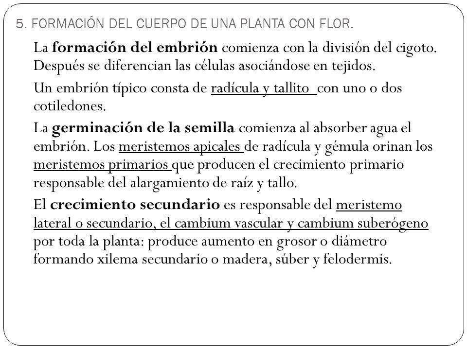 5. FORMACIÓN DEL CUERPO DE UNA PLANTA CON FLOR.