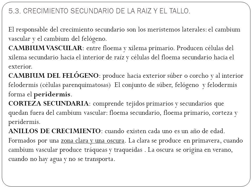 5.3. CRECIMIENTO SECUNDARIO DE LA RAIZ Y EL TALLO.