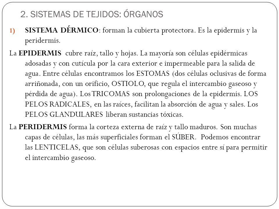 2. SISTEMAS DE TEJIDOS: ÓRGANOS