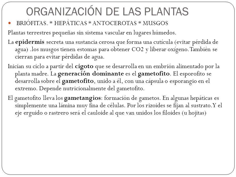 ORGANIZACIÓN DE LAS PLANTAS