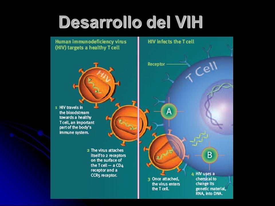 Desarrollo del VIH