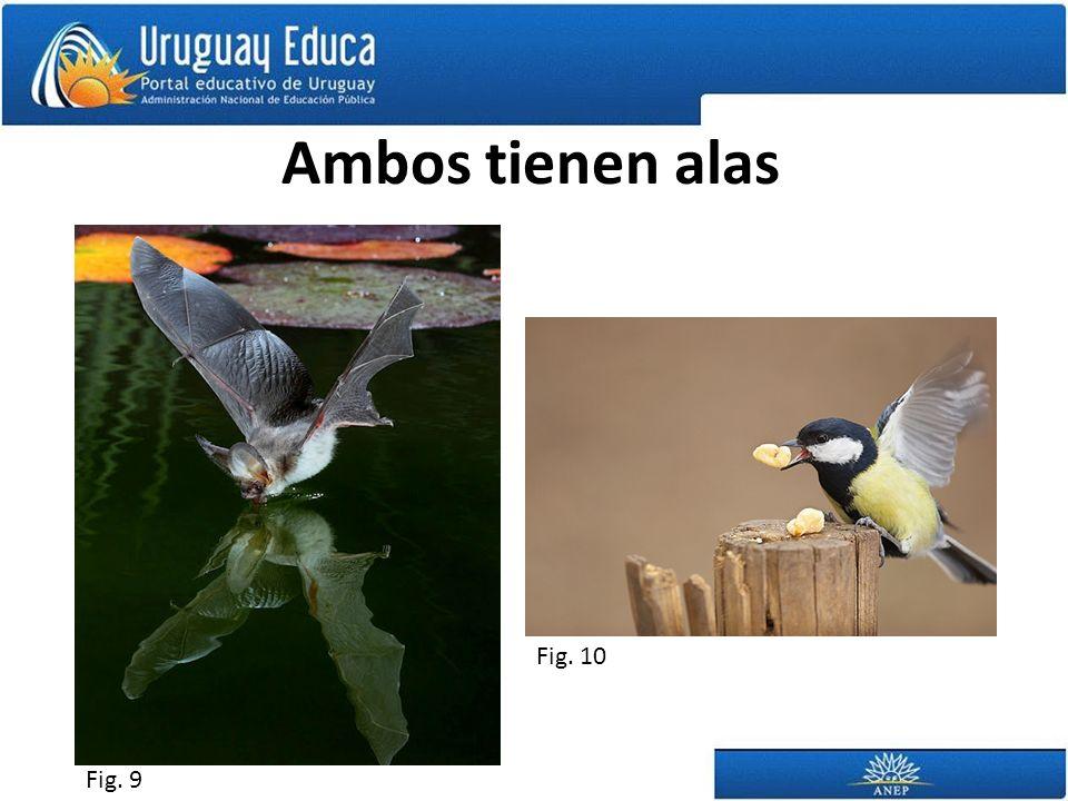Ambos tienen alas Fig. 10 Fig. 9