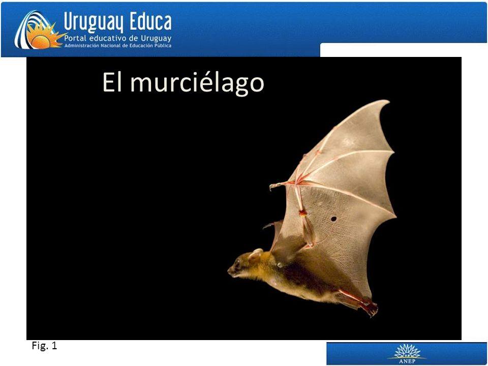 El murciélago Fig. 1
