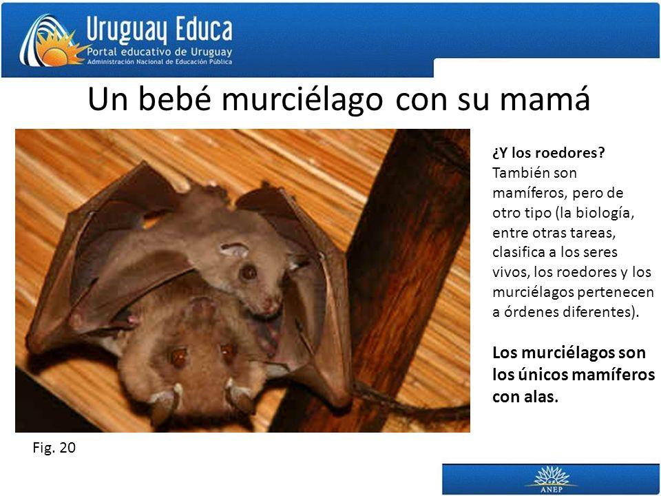 Un bebé murciélago con su mamá