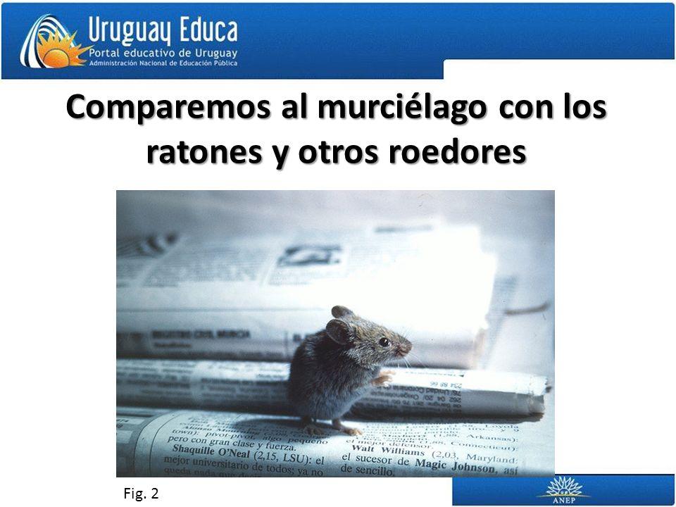Comparemos al murciélago con los ratones y otros roedores