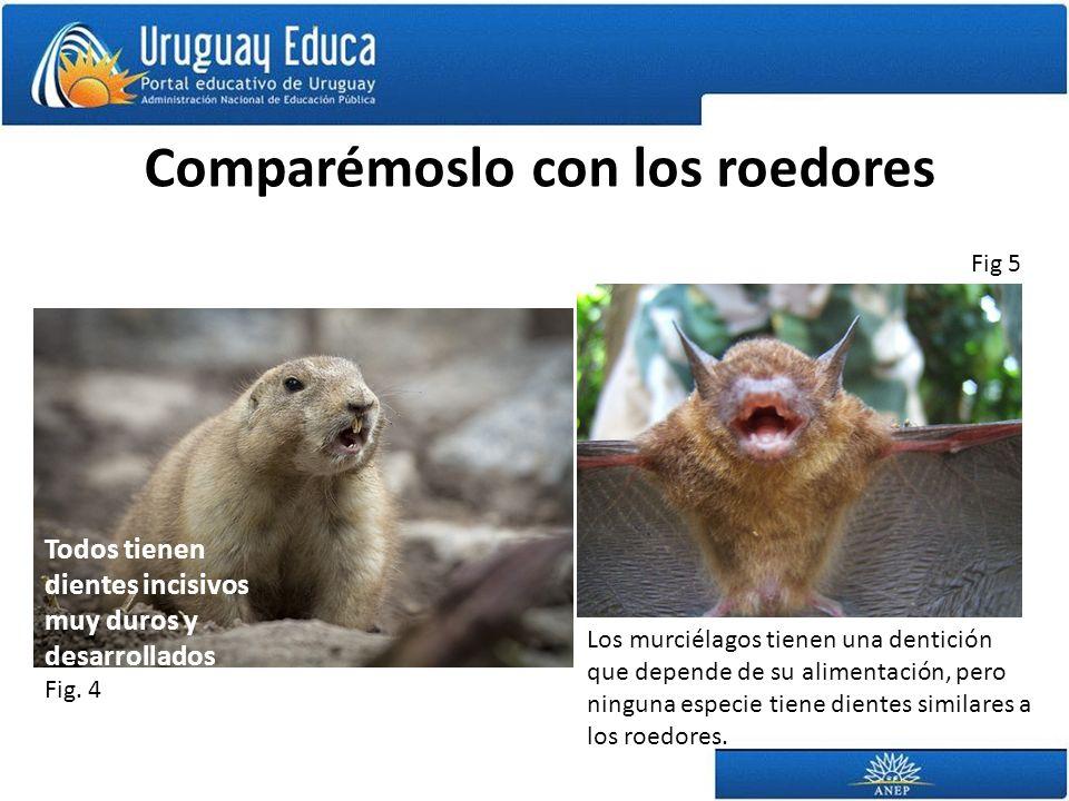Comparémoslo con los roedores