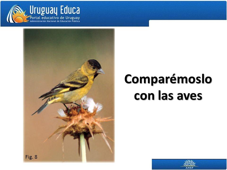 Comparémoslo con las aves