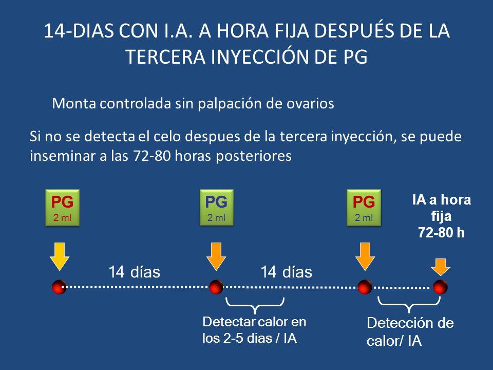 14-DIAS CON I.A. A HORA FIJA DESPUÉS DE LA TERCERA INYECCIÓN DE PG
