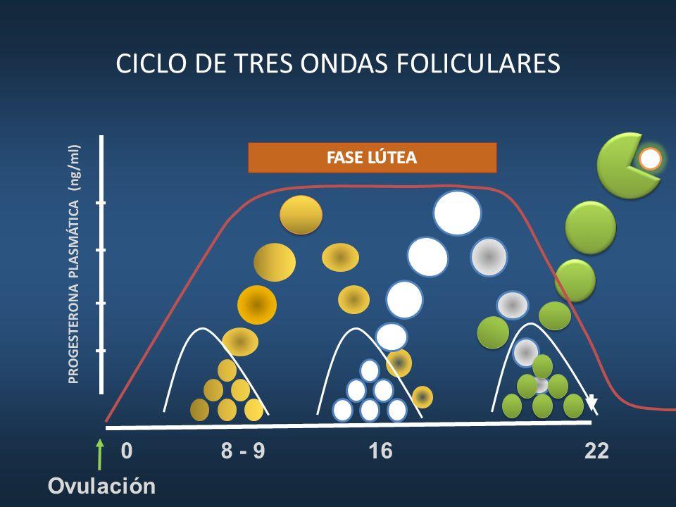 CICLO DE TRES ONDAS FOLICULARES