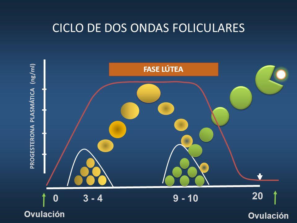 CICLO DE DOS ONDAS FOLICULARES