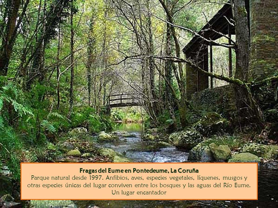 Fragas del Eume en Pontedeume, La Coruña Parque natural desde 1997