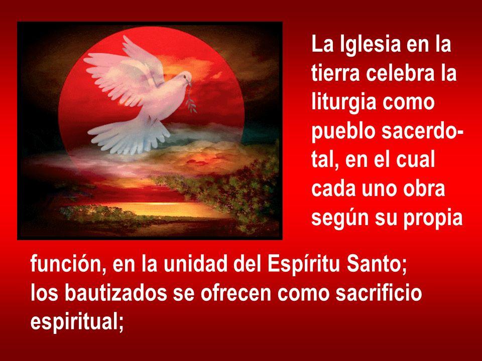 La Iglesia en la tierra celebra la. liturgia como. pueblo sacerdo- tal, en el cual. cada uno obra.