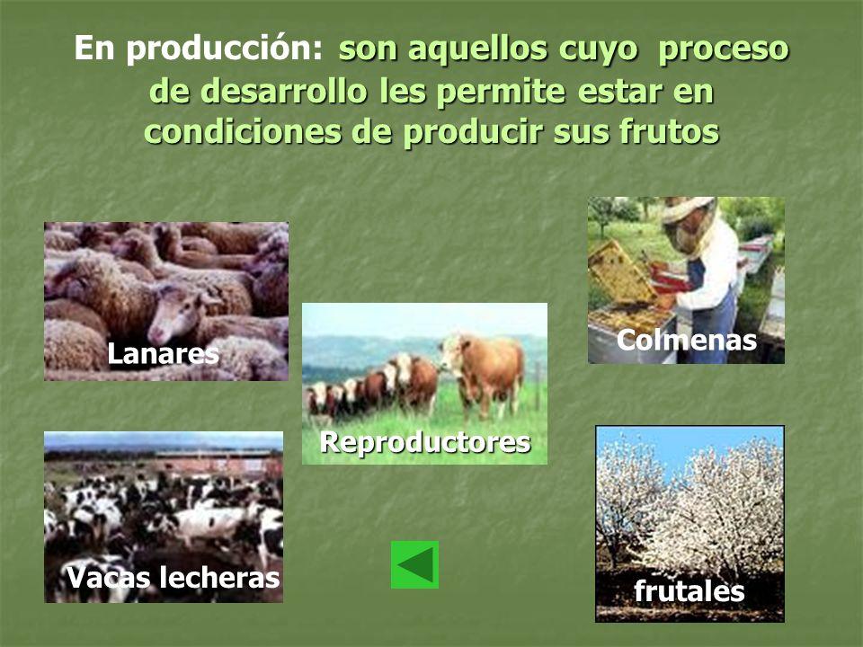 En producción: son aquellos cuyo proceso de desarrollo les permite estar en condiciones de producir sus frutos