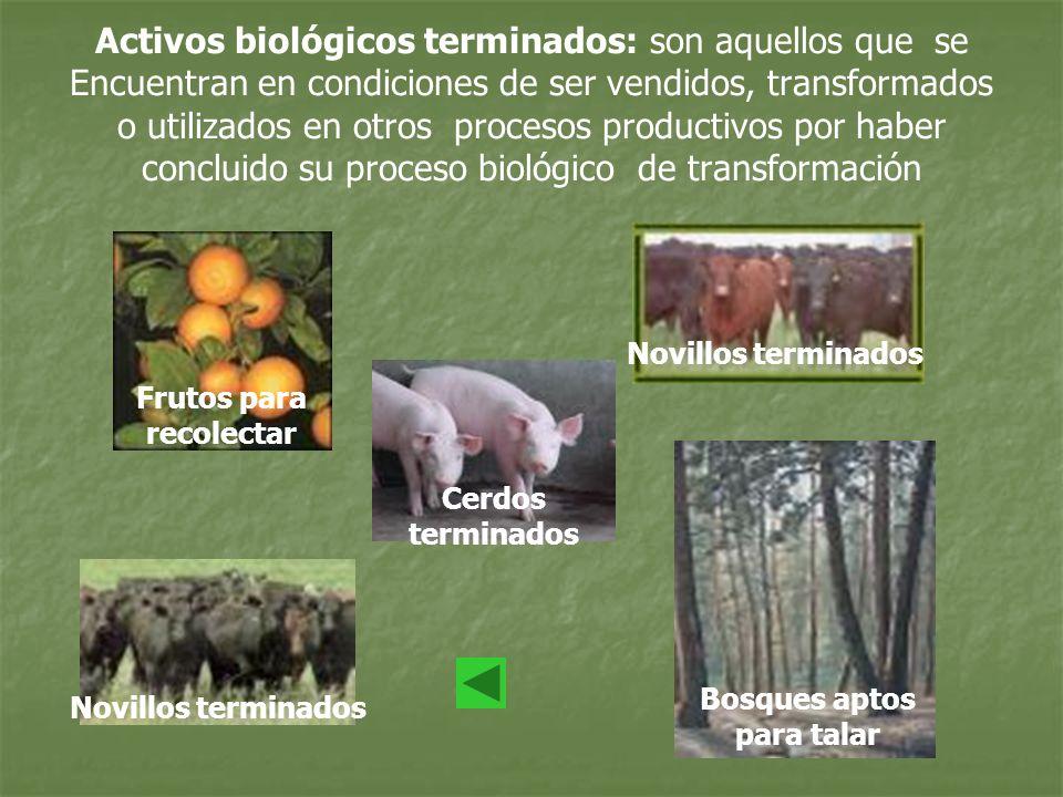 Frutos para recolectar Bosques aptos para talar