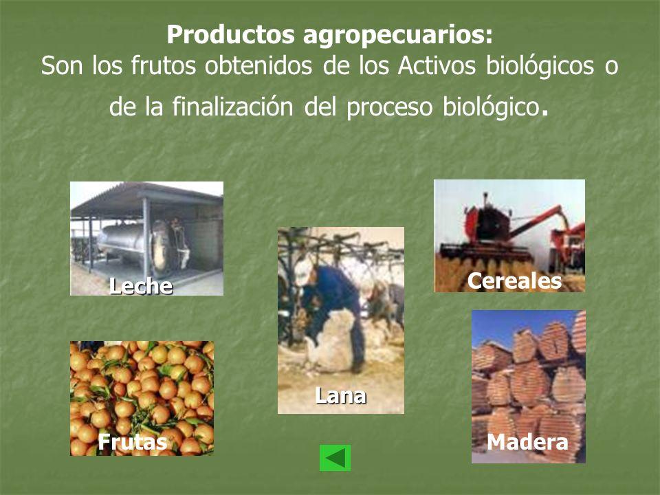 Productos agropecuarios: Son los frutos obtenidos de los Activos biológicos o de la finalización del proceso biológico.