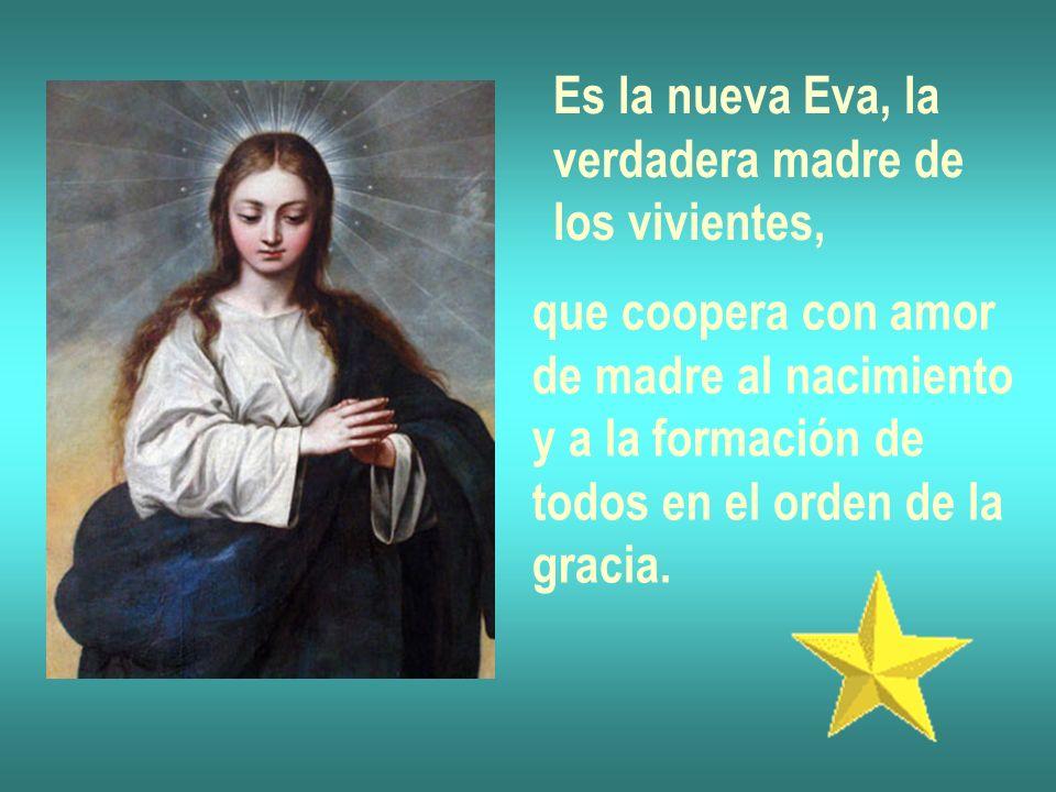 Es la nueva Eva, laverdadera madre de. los vivientes, que coopera con amor. de madre al nacimiento.