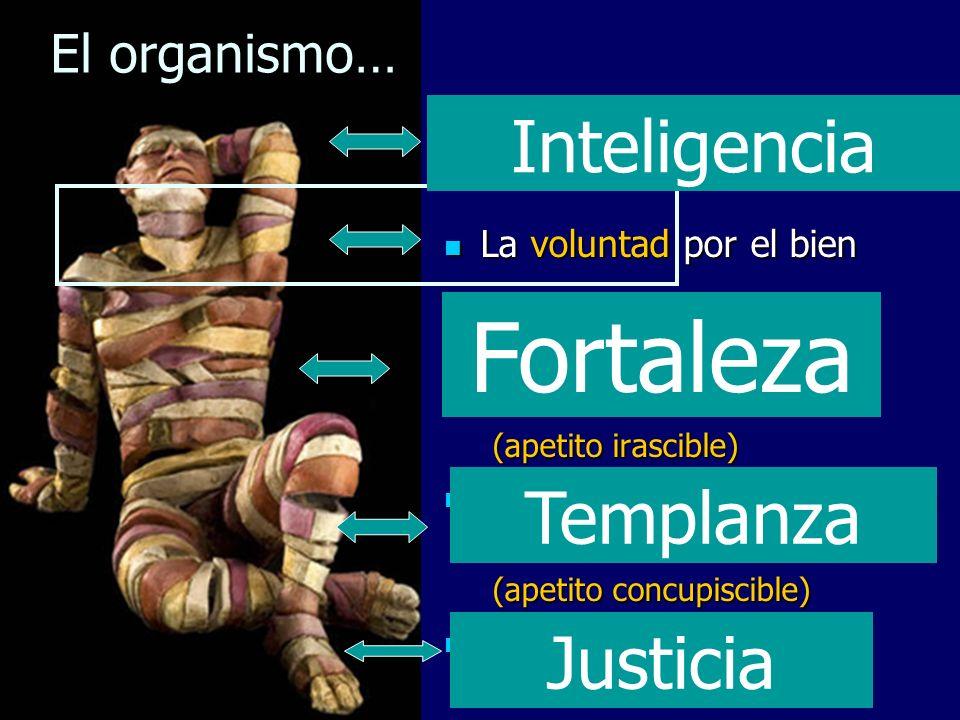 Fortaleza Inteligencia Templanza Justicia El organismo…