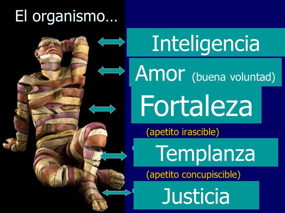 Fortaleza Inteligencia Amor (buena voluntad) Templanza Justicia