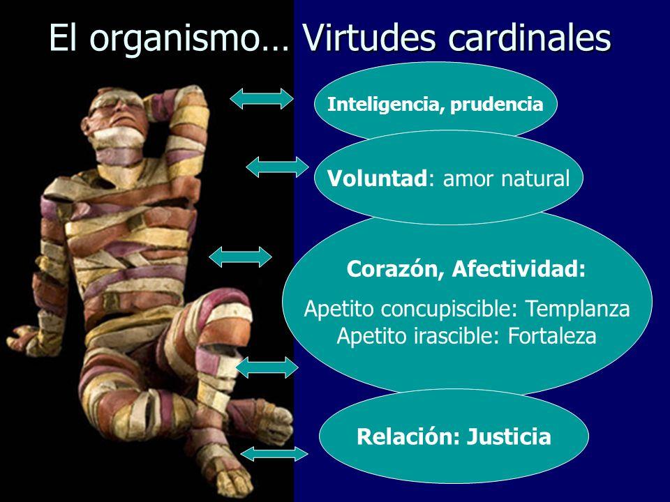 El organismo… Virtudes cardinales