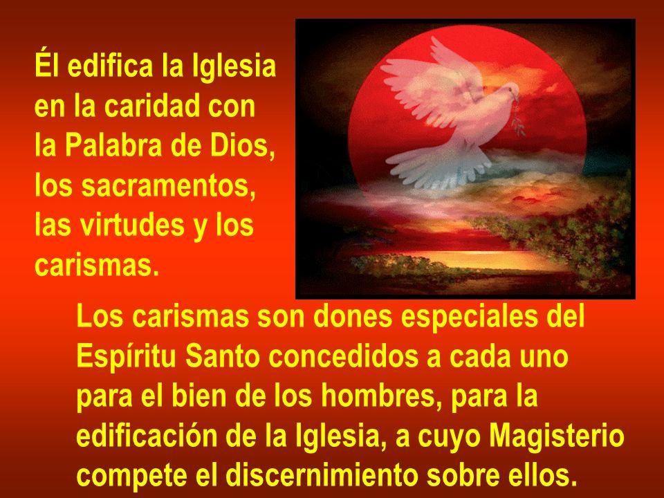 Él edifica la Iglesia en la caridad con. la Palabra de Dios, los sacramentos, las virtudes y los.