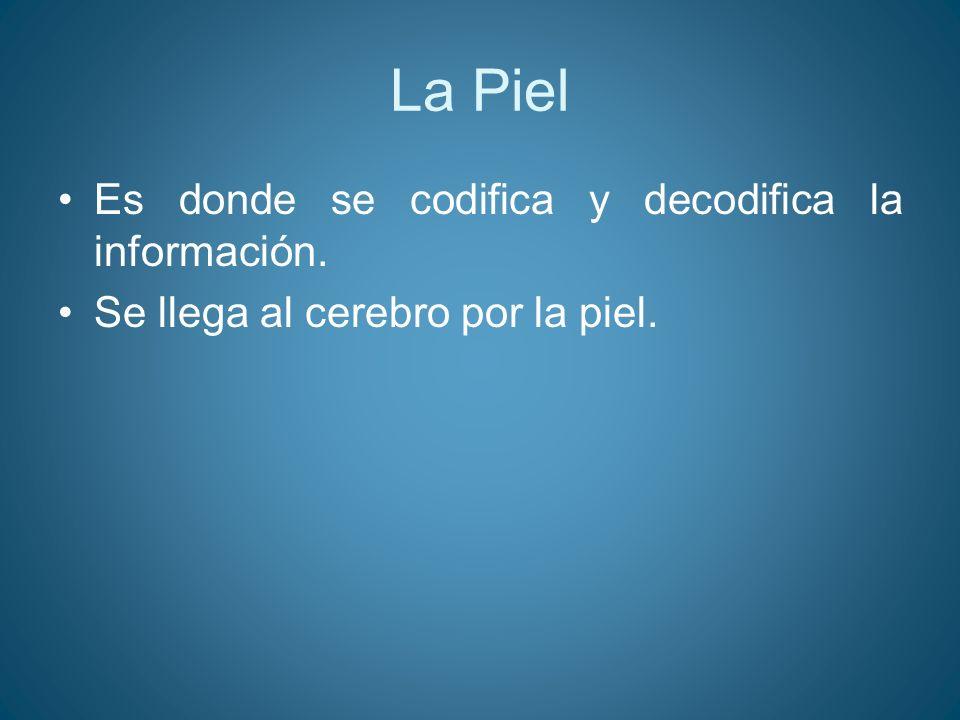 La Piel Es donde se codifica y decodifica la información.