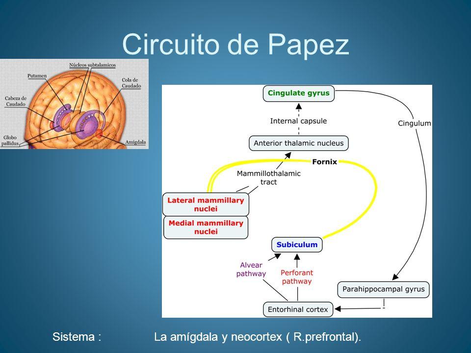 Circuito de Papez Sistema : La amígdala y neocortex ( R.prefrontal).