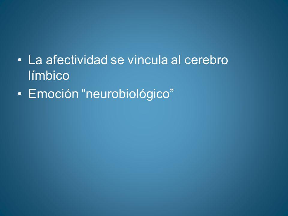 La afectividad se vincula al cerebro límbico