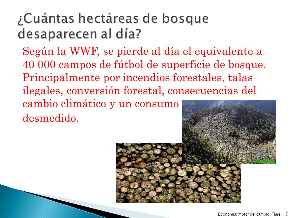 ¿Cuántas hectáreas de bosque desaparecen al día