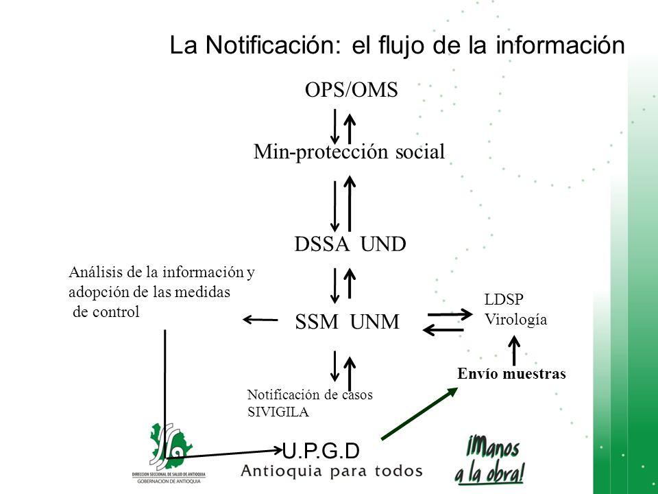 La Notificación: el flujo de la información