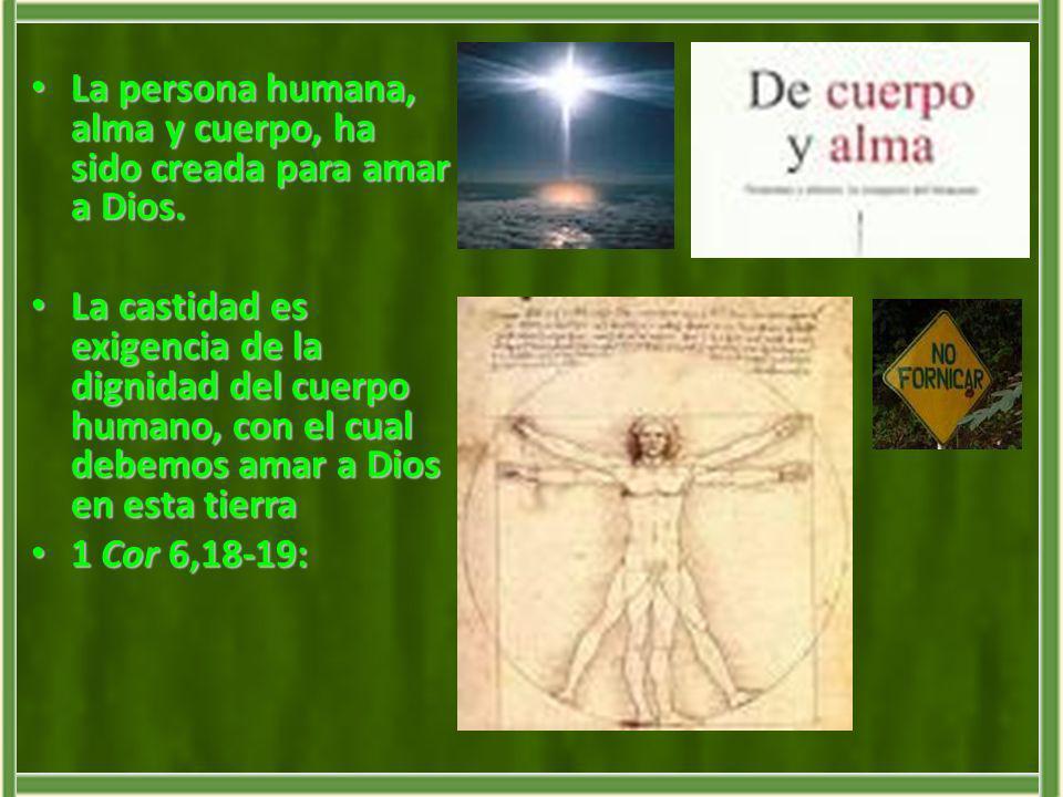 La persona humana, alma y cuerpo, ha sido creada para amar a Dios.