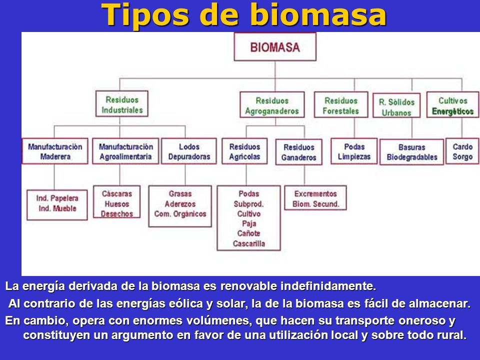 Tipos de biomasa La energía derivada de la biomasa es renovable indefinidamente.