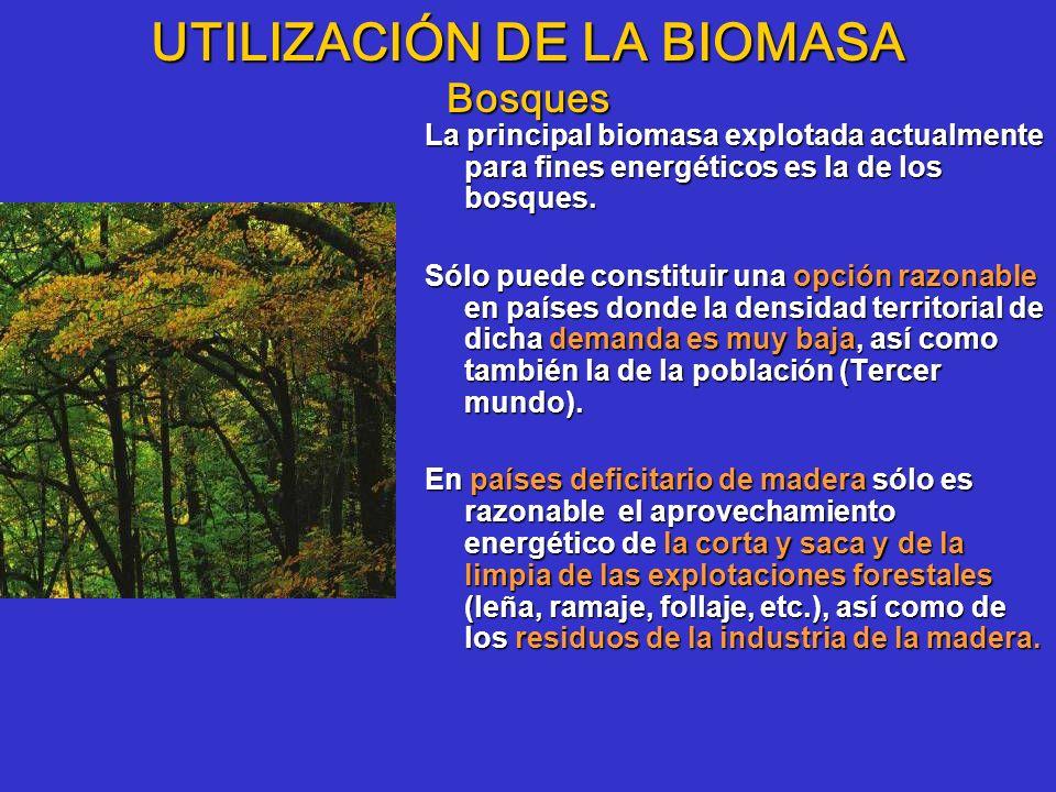 UTILIZACIÓN DE LA BIOMASA Bosques