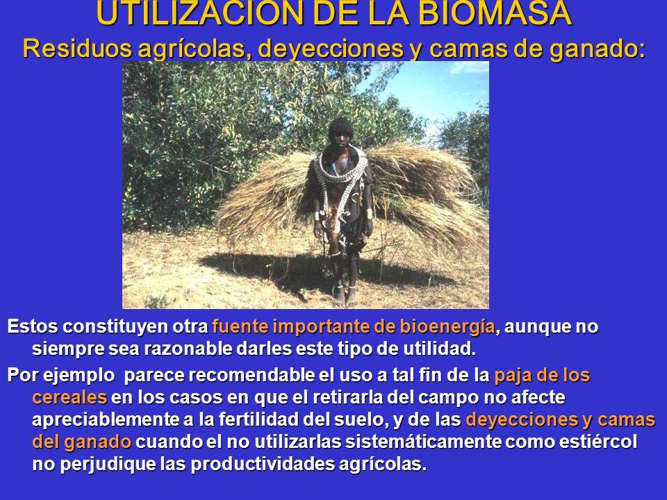 UTILIZACIÓN DE LA BIOMASA Residuos agrícolas, deyecciones y camas de ganado: