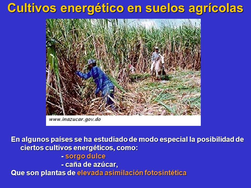 Cultivos energético en suelos agrícolas