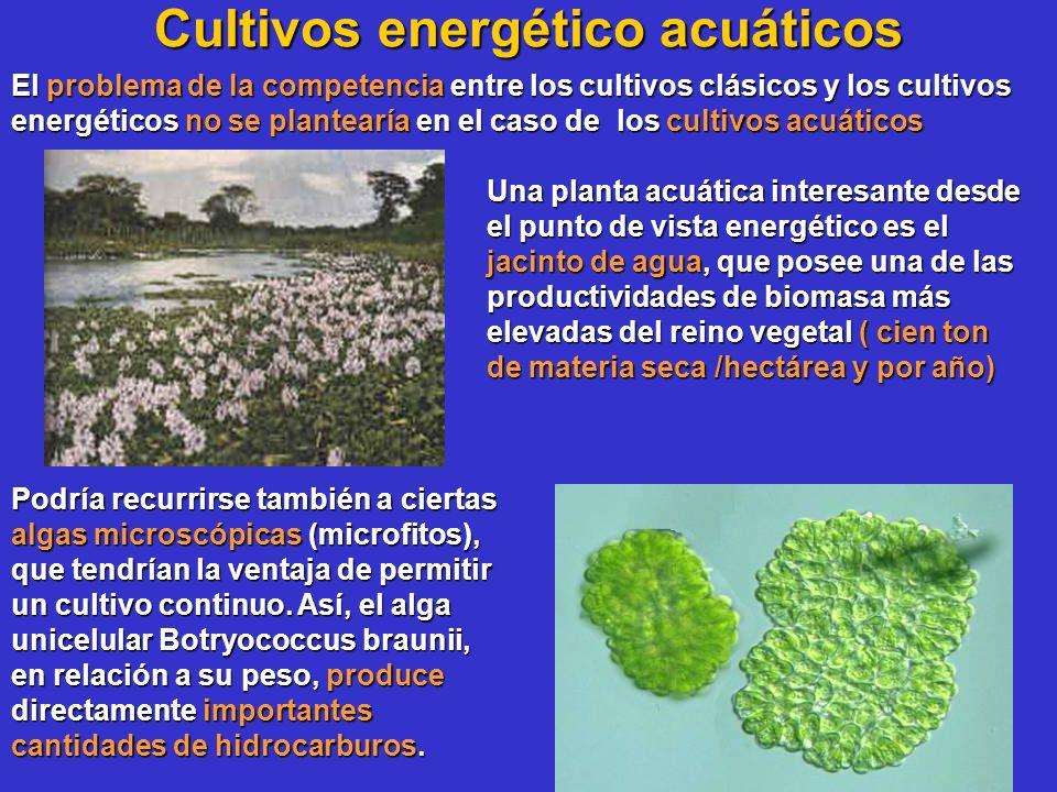 Cultivos energético acuáticos