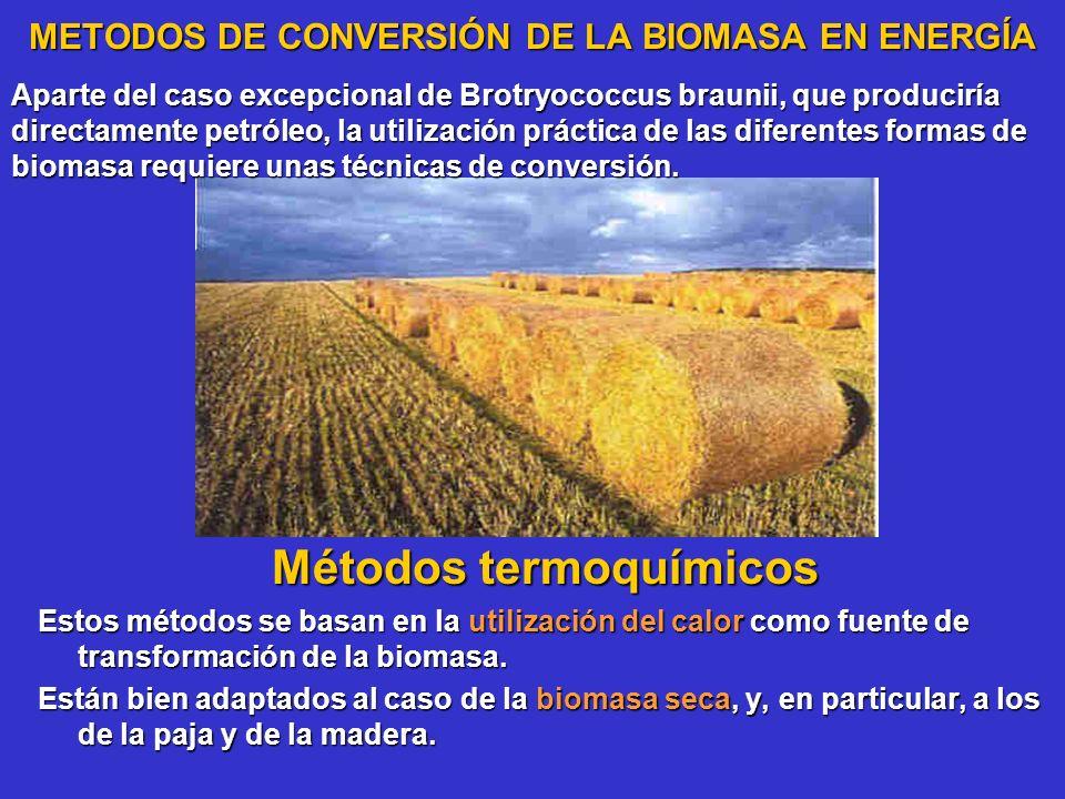 METODOS DE CONVERSIÓN DE LA BIOMASA EN ENERGÍA