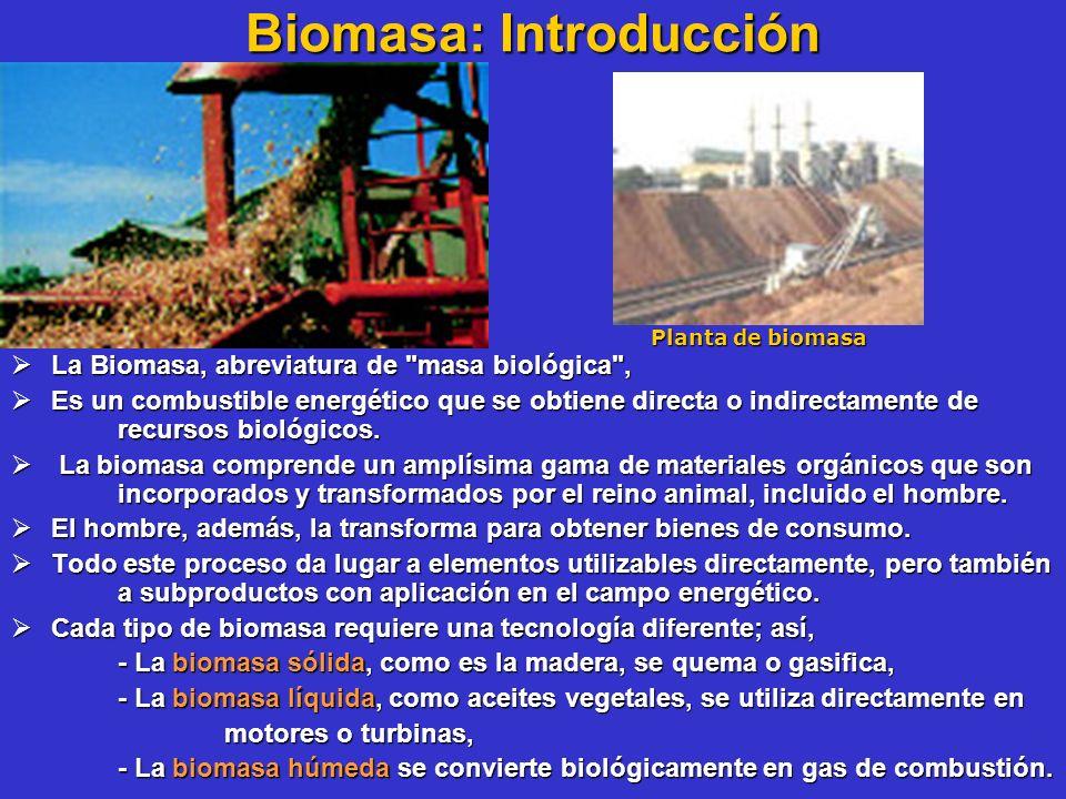Biomasa: Introducción