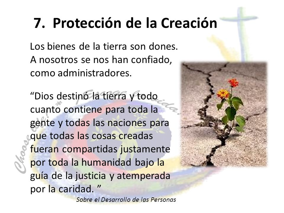 7. Protección de la Creación