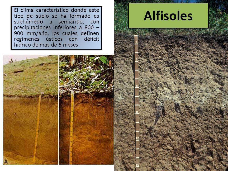 Alfisoles