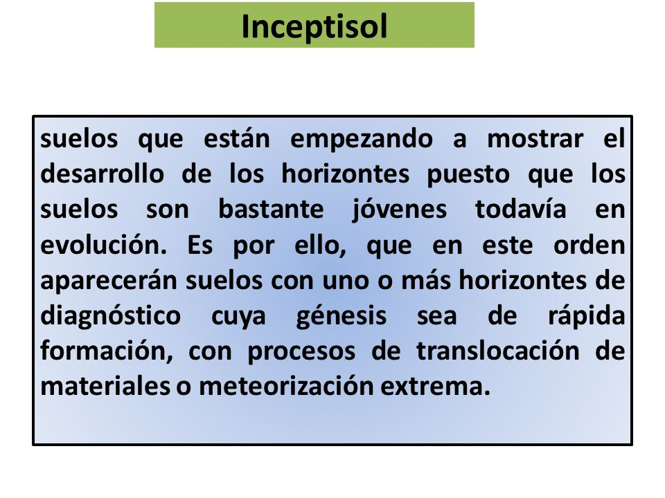 Inceptisol