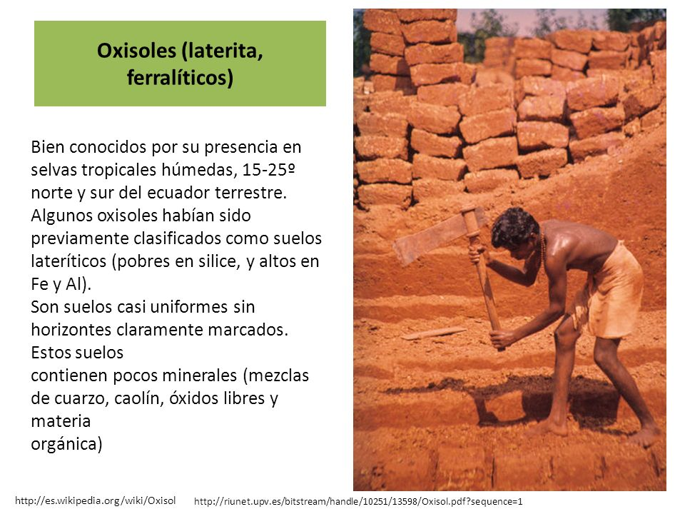 Oxisoles (laterita, ferralíticos)