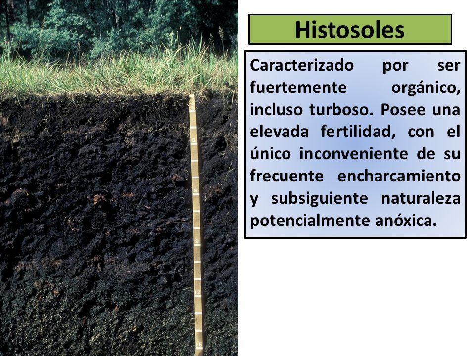 Histosoles
